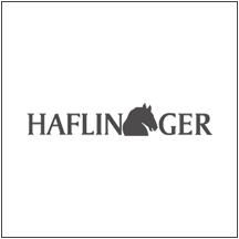 Haflinger at Hawley Lane Shoes, Connecticut